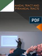 Pyramidal Tract