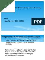 Presentase Tugas Potong 2007
