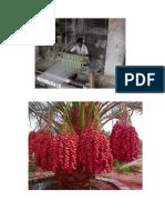 bahrain plants