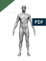 Anatomomía - 3d Cuerpo III