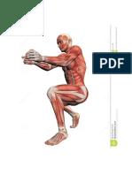 Anatomía - Ilustración VI Musculo