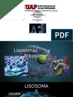 Lisosomas y Ribosomas (Grupo 1)