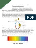 casestudy-lacticacidfermentation doc