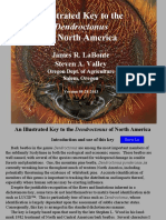 Llaves de Identificacion Dendroctonus Illustrated Key to the Dendroctonus of North America