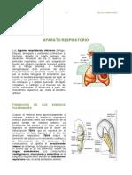13° APARATO RESPIRATORIO.pdf