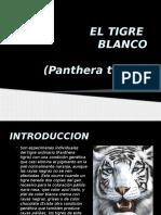 tigre.pptx