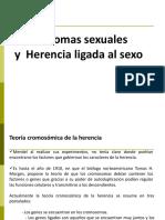 Cromosomas Sexuales y Herencia Ligada Al Sexo