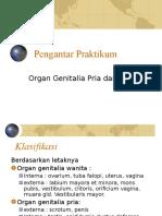 Topografi Sistem Reproduksi