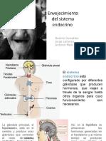 Presentación Sistema Endocrino