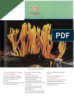 todo de hongos.pdf