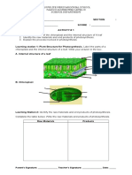 activity sheet photosynthesis