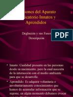 Funciones Del Aparato Masticatorio Innatos y Aprendidos 1216153288412040 9