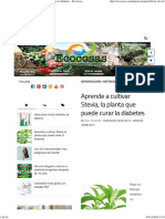 Aprende a Cultivar Stevia, La Planta Que Puede Curar La Diabetes - Ecocosas