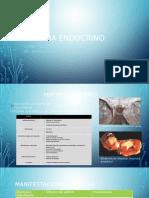 Sistema Endocrino HP y T