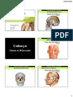 anatomia da coxa pdf