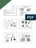CT2_Estructura_Bacteriana