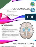Nervios Craneales - Anestesia