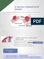 Diseminación Vascular y Alojamiento de Las Células Tumorales