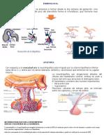 Anatomia y Fisiologia de La Neurohipofis