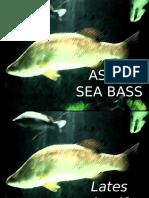 Asian Seabass