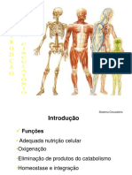Aula 5 - Sistema Circulatório - Parte 1