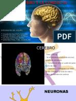 Cerebro y Conducta Cap 2[1]