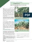 Manual Fertilización Del Banano