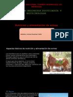 Nutricion y Alimentación de Avinos