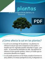 Las plantas cc.pdf