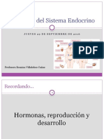 Glándulas del sistema endocrino (29-09)