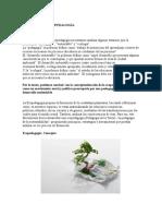 Definición de Ecopedagogía