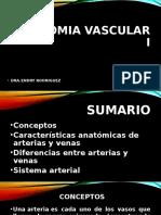 Anatomia Vascular i