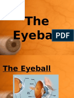 17 the Eyeball and Muscles of the Eye