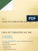 Caile de Conducere Ale Snc
