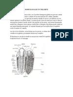 Investigacion Trilobites