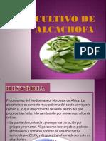 Cultivo de Alcachofa