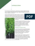 Manejo de Plantas Cítricas en Vivero