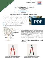 poda_en_frutales._resumen