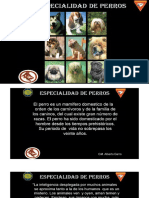 Perros Especialidad