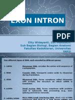 1.5 Presentasi Ekson Intron
