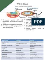 Breve Resúmes Célula Eucariota-procriota