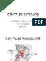 GENITALES_EXTERNOS