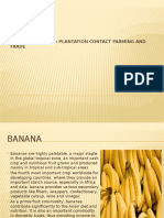 Banana PPT
