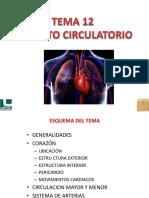 Tema 12-Aparato Circulatorio