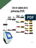 23 PCR Reaccion en Cadena de La Polimerasa