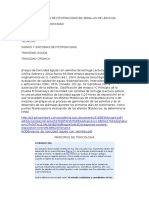Evaluacion de Fitotoxicidad en Semillas de Lechuga