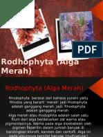 Rodhophyta (Alga Merah) 1.pptx