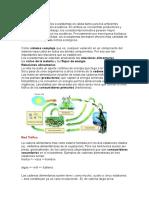 2.redes trofica bioma selva.docx