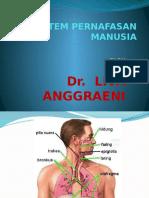 Sistem Pernafasan
