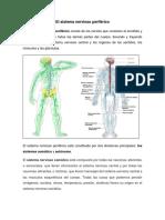 El Sistema Nerviosos Periférico